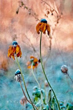 Wild Flowers, Autumn Flowers, All Nature, Amazing Nature, Autumn Garden, Gerbera, Botanical Art, Trees To Plant, Backgrounds
