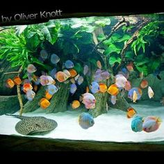 How To Decorate Your Boring Fish Tank Want 333 Pinterest
