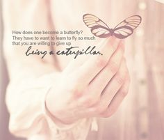 butterfly, cute, girly, life quote, love quote, pink  http://favim.com/image/52386/#