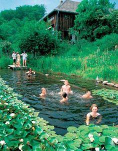 backyard-natural-swimming-pool-10