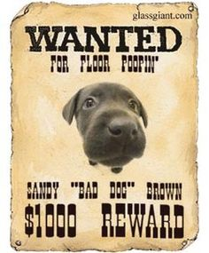 Mobilefish.com - Wanted poster generator Link: http://www ...