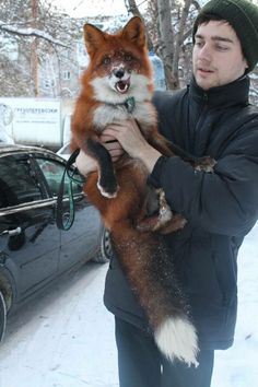 Oh just my pet fox!