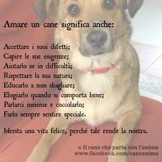 Cani Love Pet, I Love Dogs, Cute Dogs, Animals And Pets, Cute Animals, Hachiko, My Only Love, Polar Bear, Dog Cat