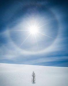A perfect April day in the backcountry as a sun halo - one of the best I've seen - appeared above a single tree. Jones Pass, Banff National Park. A perfect April day in the backcountry as a sun halo - one of the best I've seen - appeared above a single tree. Jones Pass, Banff National Park.