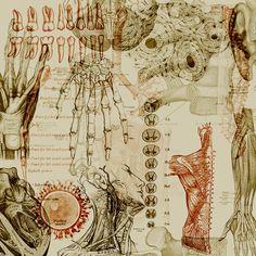 fuckyeahmedicaldiagrams:  Anatomy II by ninive.