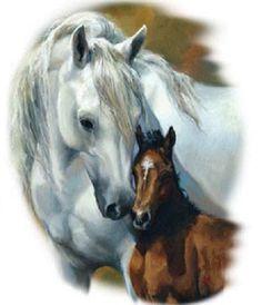 TSHIRT    White Mare & Bay Foal  Horse by AlwaysInStitchesCo, $13.00