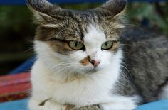 Ringworm can pass from animals to humans, and make both extremely ill, so make sure your cat is protected.
