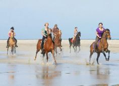 Riding Holidays on the beach in Djerba island... We will be glad taking you in a memorables Beach ride with us