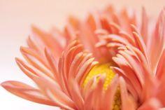 Flower Macro by Ana Pontes.