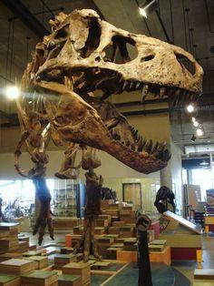 T-Rex Discovery Centre, Eastend, SK. Dinosaur Art, Tyrannosaurus, Skeletons, T Rex, Prehistoric, Dinosaurs, Discovery, Centre, Canada