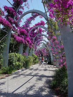 "Nature takes care of us"" Brisbane flower bower, Queensland, Australia photo by: Murfomurf ♥ would love to stroll under those ♥ Queensland Australia, Western Australia, Australia Travel, Brisbane Queensland, Places To Travel, Places To See, Beautiful World, Beautiful Places, Landscape Design"