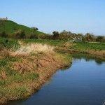 The River Parrett