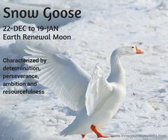 Snow Goose is also an Earth Medicine astrological sign for the Earth Renewal Moon (same time as Capricorn): determination, perseverance, ambition, resourcefulness