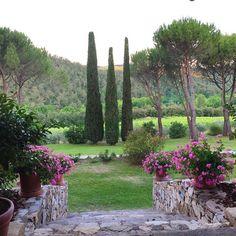 Enchanted #tuscany #chianti #castellodispaltenna #honeymoon #italy #winecountry