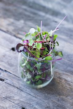Learn more about the superfood microgreens! Delicious and packed with health benefits, microgreens are the perfect garnish for any meal!