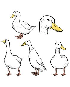 ///// 80% OFF Sale Duck isolated vector ///// Duck isolated vector clipart…
