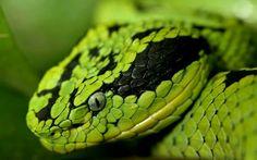 Jak je krásně zelený :)