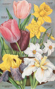 Old illustration of spring blooms