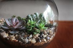 Beautiful succulent garden. Photo and terrarium by Sandy Polson.