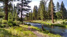 Fluss, Brücke, Grün, Park, Landschaft, Natur, Wasser