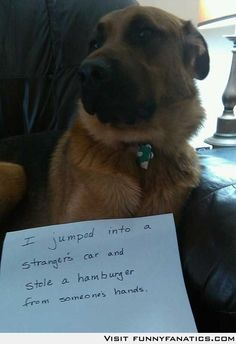 For shame! I don't usually like these dog shaming things, but this one is funny!