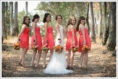 Bride wedding dress and coral bridesmaids dresses, Jack London State Park, Wedding Photography, Sonoma Wedding Photographer, www.carmenalvarezphoto.com