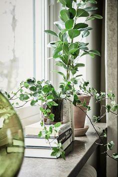 20 idées à copier pour décorer ses rebords de fenêtre - Quelques livres superposés et deux plantes vertes: simple et efficace. © Pinterest 55vadrat