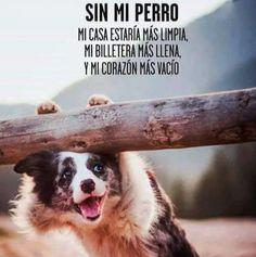 Sin mi perro ... mi casa estaría más limpia .... mi billetera más llena ... y mi corazón más vacío #foto #fotos #perro #perros #frase #frases #cachorro #cachorros #animales #animal #mascota #mascotas