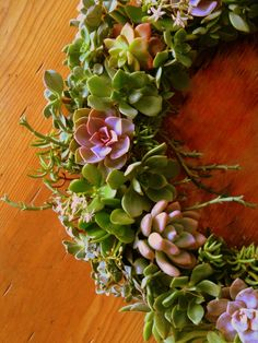 succulent wreath, for the holidays!