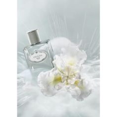 Perfum Trend: Vive la différence! | Harper's BAZAAR