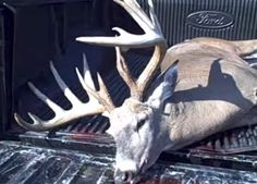 Whitetail Wisdom: Hunter's First Bow Buck is Giant - Deer and Deer Hunting Archery Hunting, Deer Hunting, Deer Horns, Hunter S, Hunting Season, Homesteading, Fishing, Bow, Wisdom
