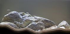 Shelldweller sanctuary