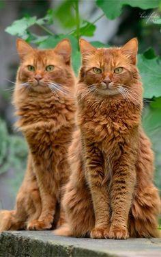 Double beautiful, gorgeous ❤❤