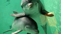 Dolphins deserve same rights as humans, say scientists
