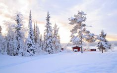 Vos vacances en Laponie