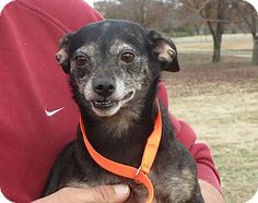 Terrier (Unknown Type, Small) Mix Dog for adoption in Greenville, Rhode Island - Ester