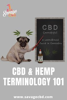 Hemp, CBD, Cannabidiol, CBD Oil, the list goes on and on; we decided to compile a CBD and Hemp Terminology guide so that you can better understand whats what. The goal is to educate you on different terms to help you identify what you are being sold. Cannabis, 100 Pour Cent, New Industries, Health Education, Things To Know, Fibromyalgia, Hemp, Knowledge, Positivity