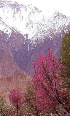 Spring in Hunza valley GB Pakistan Beauty Around The World, Places Around The World, Around The Worlds, Beautiful World, Beautiful Places, Beautiful Pictures, Simply Beautiful, Brunei, Karakorum Highway