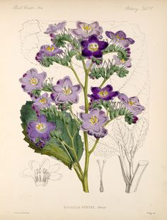 Smithsonian Institution Libraries Detail of PlantsImage no.bca_21_05_00_131