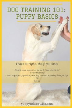 Business news and Financial news from Reuters.com. *** More info could be found at the image url. #dogtrainingtips