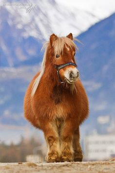 Horse Photos, Horse Pictures, Funny Animal Pictures, Farm Animals, Animals And Pets, Funny Animals, Cute Animals, Pretty Horses, Horse Love
