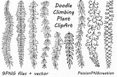 Fonts Alphabet Discover Doodle Climbing Plant ClipArt Hand Drawn Herbs Clipart Leaves clip art Herbs Silhouette PNG Vector For Personal and Commercial Use Easy Doodle Art, Doodle Art Drawing, Plant Drawing, Drawing Ideas, Vine Drawing, Clipart, Banner Drawing, Simple Doodles, Flower Doodles