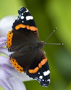 butterfly 6 by EphemeralMind on DeviantArt