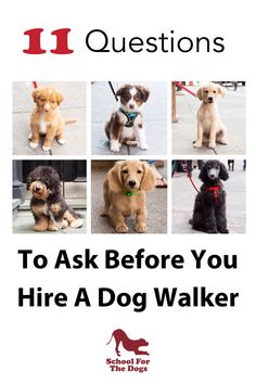 How do you know if the person you're hiring is a reputable dog walker? Here's 11 questions to ask before they start! #dogwalker #dogtraining #walking #dogwalkerflyer Therapy Dog Training, Dog Training Tips, Crate Training, Potty Training, Dog Walker Flyer, Big Dog Little Dog, Living With Dogs, Dog Safety, Safety Tips
