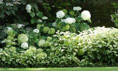 Making a massif is like painting a landscape. Little Gardens, Back Gardens, Outdoor Gardens, Green Garden, Green Plants, Shade Garden, Landscape Design, Garden Design, Hydrangea Garden