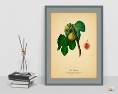 Items similar to Home fig decor Vintage Botanical watercolour art print figs poster picture antique wall old image wall print cubicle decor drawing vintage on Etsy Old Images, Botanical Wall Art, Watercolour Art, Poster Pictures, Cubicle, Figs, Wall Prints, Vintage Art, Antiques