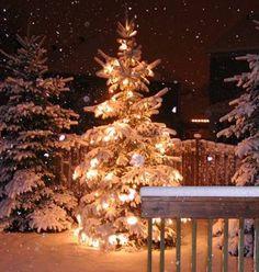 47667-Snowing-Lighted-Christmas-Tree.jpg (450×474)