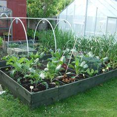 raised-garden-bed-adsense-550px.jpg 550×550 pixels