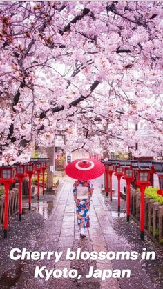 Beautiful Places To Travel, Wonderful Places, Cool Places To Visit, Cherry Blossom Japan, Cherry Blossoms, Nature Photography, Travel Photography, Nature Story, Heavenly Places