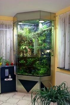 Beautiful paludarium , a work of art to decorate your interior with live plants and living creatures .